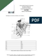 Autoevaluacion Articulacion Temporo Mandibular