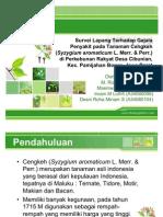 pengamatan penyakit perkebunan cengkeh. IPB.