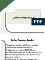 Jalur Pentosa Fosfat