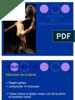 UNIDAD 4 - clase 9 - MIOLOGIA - MMII - Pelvitrocantéreos - Muslo