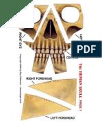 HumanSkull_papercraft