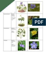Artenex Krautpflanzen