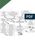 Invertebrates Chart