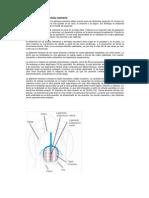 Anatomía de la glándula mamaria