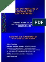 Pcr y Electroforesis Biociencias 2011