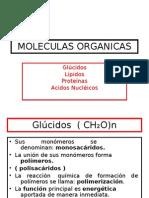 MOLECULAS ORGANICAS[1]