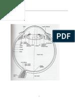 Anatomia Globului Ocular