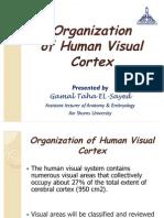 Organization of Human Visual Cortex