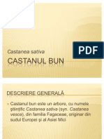 Castanul Bun