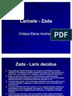 Larice - Zada