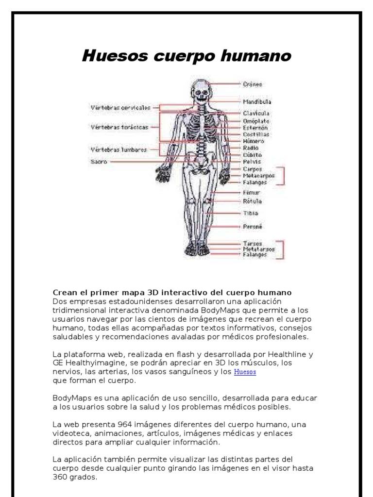 Huesos cuerpo humano