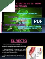 Expocision de Anatomia El Recto