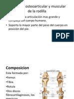 la rodilla y el pie