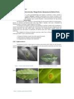 Relatório da Diagnose de Ferrugem do Cafeeiro e Cercosporiose e Mancha Branca do Milho