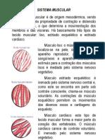 Apostila 1 Sistema Muscular