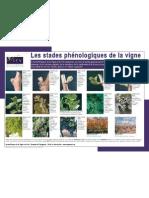 IFV - poster les stades phénologiques de la vigne 09