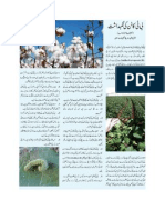 Precaution of Cultivating BT Cotton