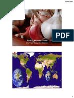 Alho no mundo e perspectivas para o alho do Sul do Brasil em 2011 e 2012