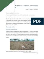 Informe Final Del Cultivo de Cebollino