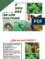 3-manejoecologicodeplagas-100103181848-phpapp01