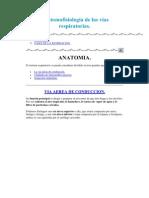 Anatomofisiología de las vías respiratorias