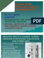 Fungi From Rhizoshperic Soil and Its Impact on Productivity