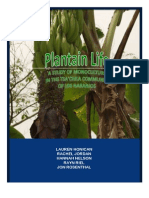 Monoculture in Ecuador