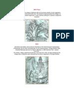 Pictorial Representation of SastrijiMaharaj Life in PDF