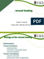 Cutaneos Wound Healing