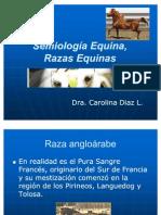 06_Semiología Equina