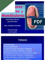 Presentacion Premolares Maxilares y Mandibulares