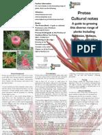 Protea Cultural Notes