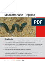 Mediterranean Reptiles