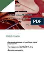 3 Batiz Neuroanatomia MedulaEspinal