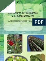 Adaptación de las plantas al ambiente