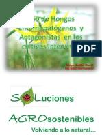 Uso de Hongos Entomopatogenos y Antagonist As en Los Cultivos Intensivos