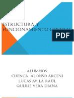 Estructura y Funcionamiento General