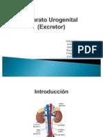 Aparato Urogenital