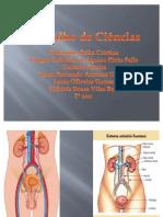 sistema urinario e suas doenças