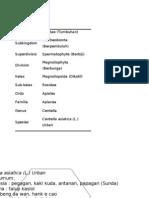 Klasifikasi Pegagan