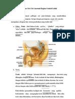 (3) Pelajaran Ilmu Keperwatan Dan Kedokteran Anatomi Reproduksi Laki2