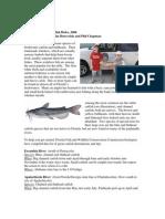 Fb5 Catfish