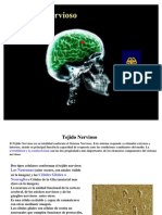 sistema nervioso abril