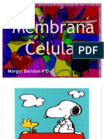 membranacelularbaridon