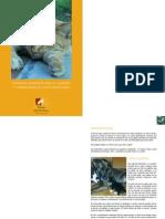 Consejos Generales Para El Cuidado y Comprencion de Gatos Adoptados