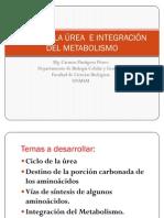CICLO DE LA ÚREA  E INTEGRACIÓN  DEL METABOLISMO DE CARBOHIDRATOS