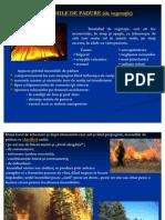 Incendii de Padure - Pre Zen Tare