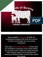 Bovine Breeds