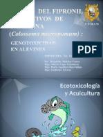 Efecto Del Fipronil en Cultivos de Gamitana