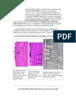 El Citoplasma de La Fibra Muscular Estriada Se Caracteriza Por La Presencia de Fibras Paralelas Denominadas MIOFIBRILLAS